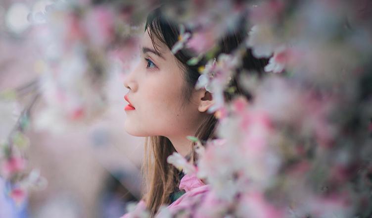 Die Kirschblüte und ihre Bedeutung in Japan